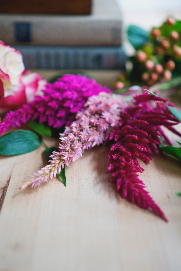 pink celosia up close