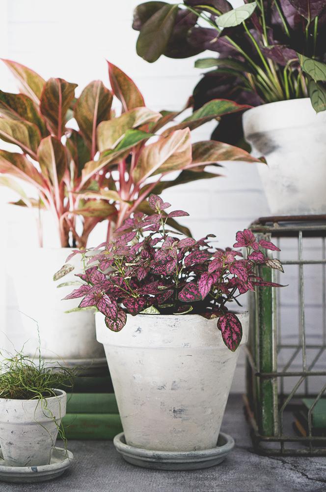faux concrete planter - pink plant web