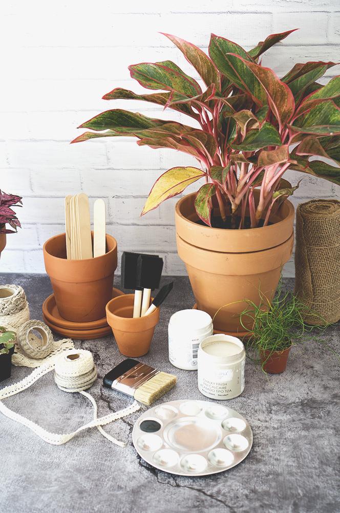 supplies + plants web